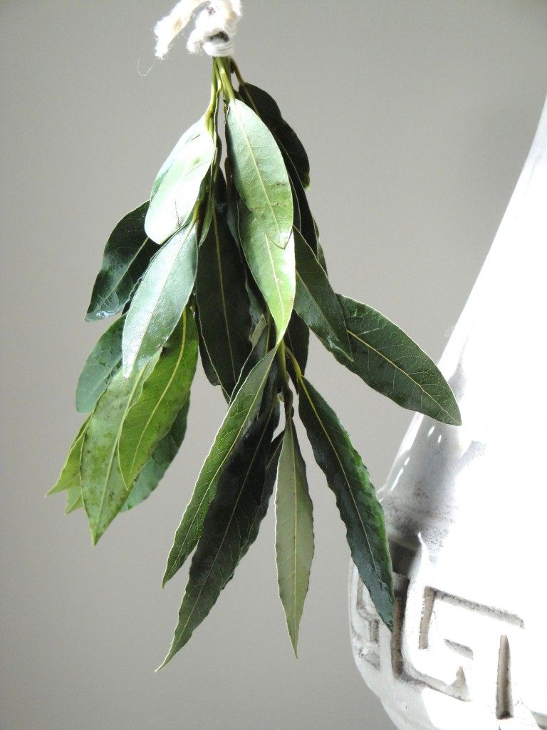Drying fresh Bay leaves